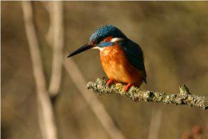 Mini-Corso di Birdwatching per principianti @ online - piattaforma Zoom | Torre | Lombardia | Italia