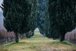 Festival italiano del Potatore @ Erbusco - Villa Lechi