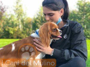 Dog Winter LabI laboratori con  I cani del Mulino @ I Cani del Mulino - Attività Cinofile e Pet Therapy in Lombardia