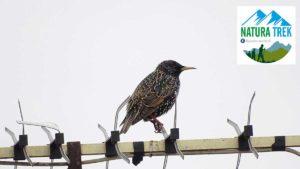 Birdwartching e birdlistening @ Amici dei parchi