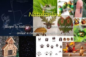 Naturonline per bambini